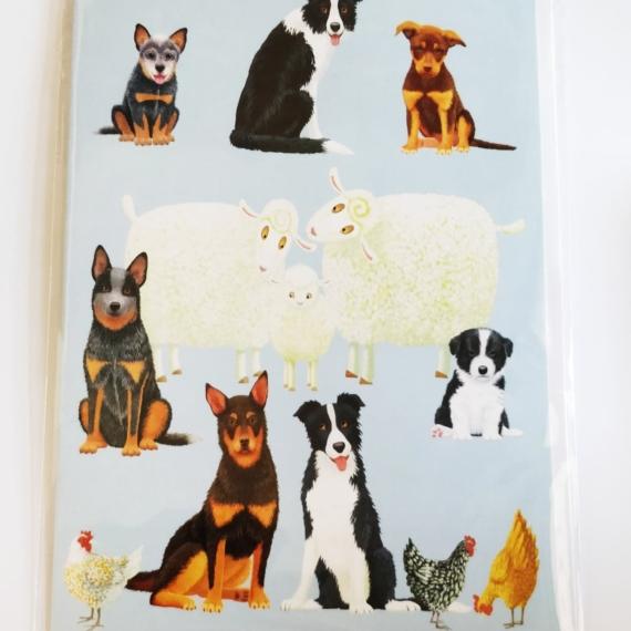Card - Australian Farm Dogs