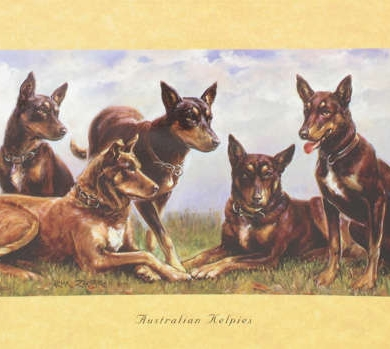 Card - Australian Kelpies