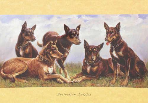 Card - Australian Kelpies
